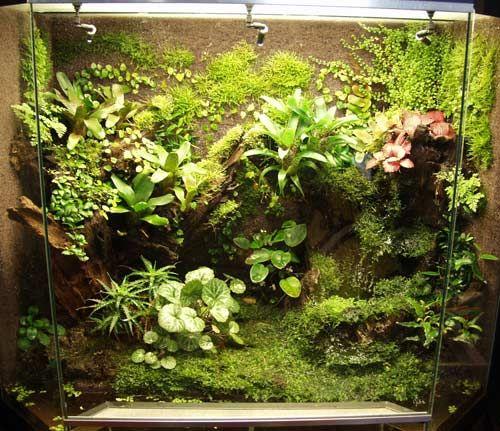 Nice plant wall