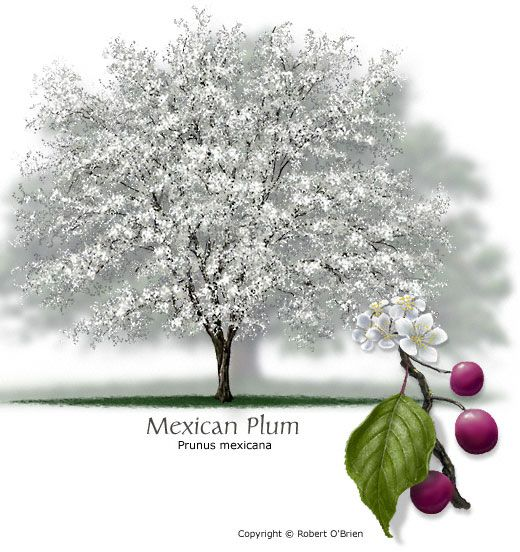68 best contest images on pinterest tree plantation tree planting and plants - Planting fruit trees in the fall a garden full of vigor ...
