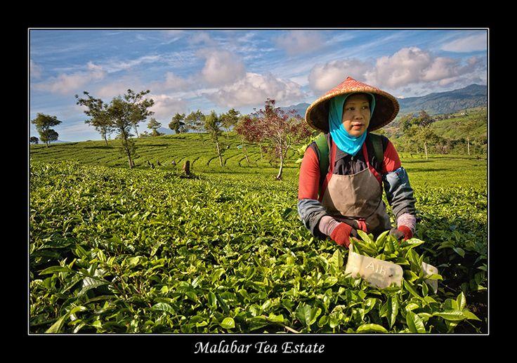 Malabar Tea Estate - Bandung, Jawa Barat