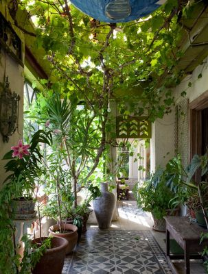 .Ideas, Country Houses, Green, Plants, Irish, Patios, Outdoor Spaces, Gardens Room, Courtyards