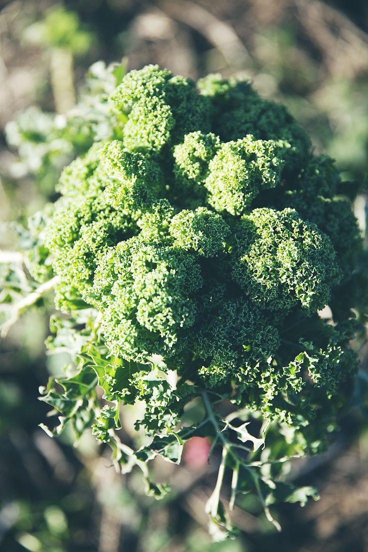 5 recept med grönkål