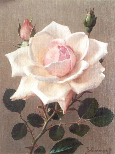 Voerman jr. J.  | Roze rozen, olieverf op doek op schildersboard 20,9 x 15,8 cm, gesigneerd r.o.