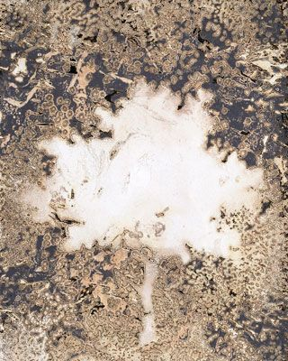 Chemigram by Julia Martin: cut out stencil, sprayed cooking oil spray, fix first, developer second.
