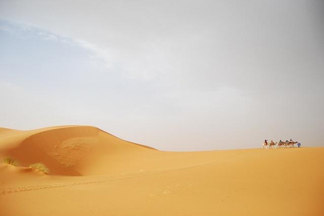 Camels, Erg Chebbi, Desert, Morocco