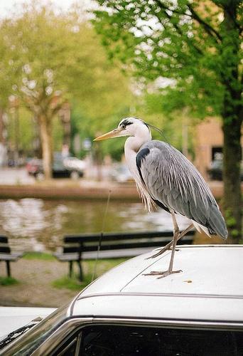 Amsterdam Stork