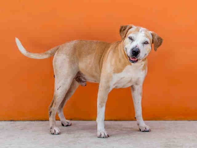 Pin On Miami Dade Hollywood Ft Lauderdale Florida Dogs Cats