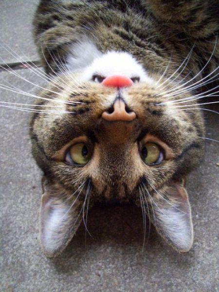 A cross-eyed cat!