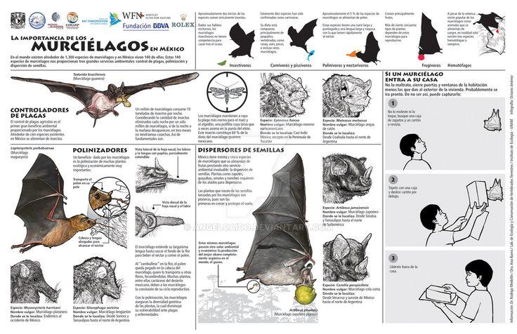 El valor de los murcielagos-The value of bats by AngelCaido on DeviantArt