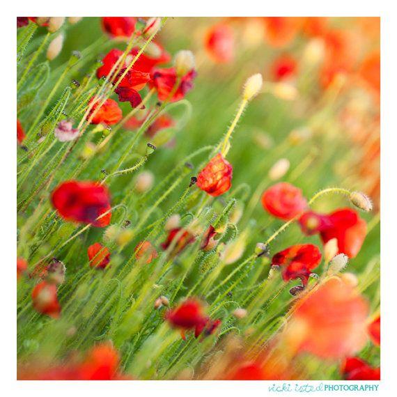 Poppy Fields  Fine Art Photography by vickiistedPHOTO on Etsy, £25.00  www.vicki-isted.co.uk