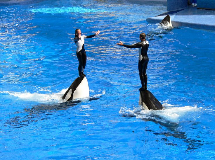 WTF, SeaWorld? Orcas Given Hallucinogens to Forget They're in Water Prisons?