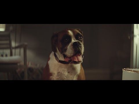 "John Lewis Christmas Advert 2016 - #BusterTheBoxer - YouTube  ""Hope it makes you smile,Cindy"""