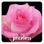Pink and White 24 Petals Head Size  6.0 - 7.0 cm Exclusive at Berkeley Florist Supply