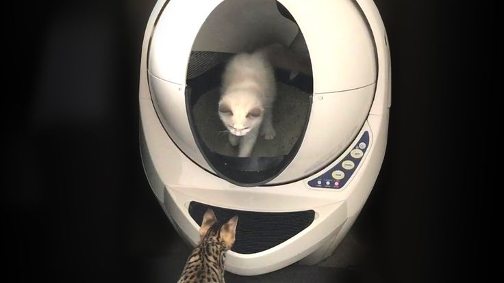 KITTENS REACT TO LITTER ROBOT
