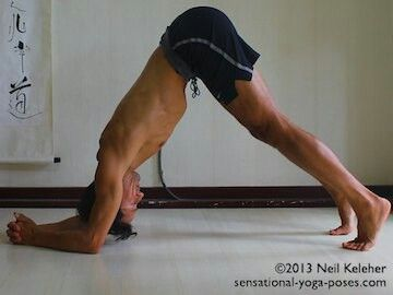 supported headstand should head touch floor  yoga