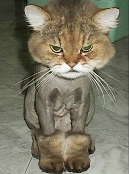 boots with the fur!!Haircuts, Cat, Ugg Boots, Hair Cut, Poor Kitty, Fur, So Funny, Uggboots, Animal