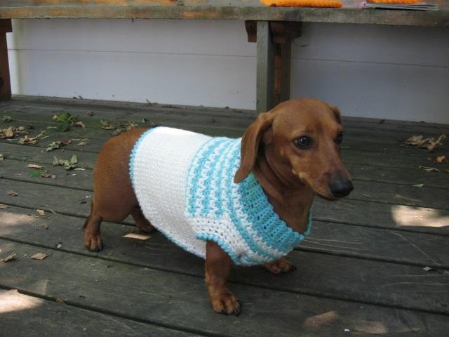 blue & white dog coat