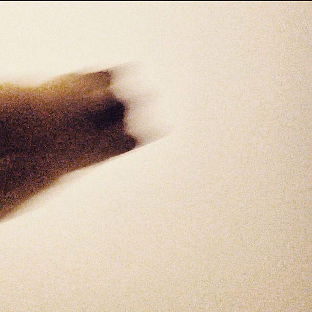 #jump #cat