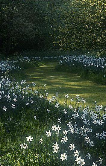 madabout-garden-design:  Romantic garden