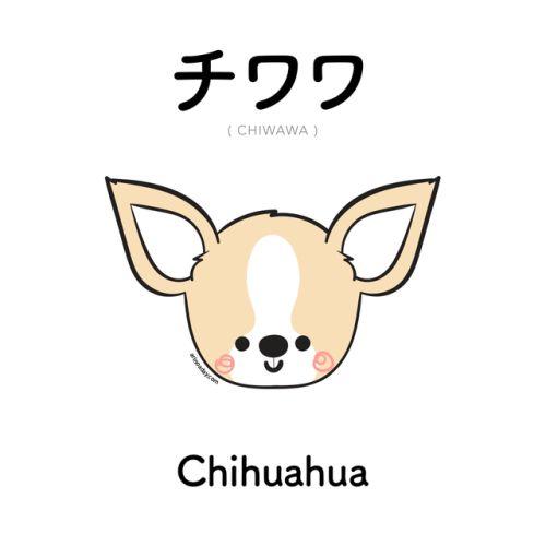 [475] チワワ | chiwawa | chihuahua