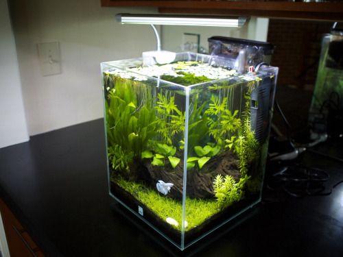 78+ ideas about Aquarium Design on Pinterest   Aquascaping ...