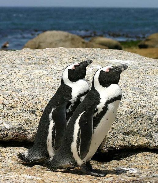 The 18 Best Penguin Species (All Of Them)