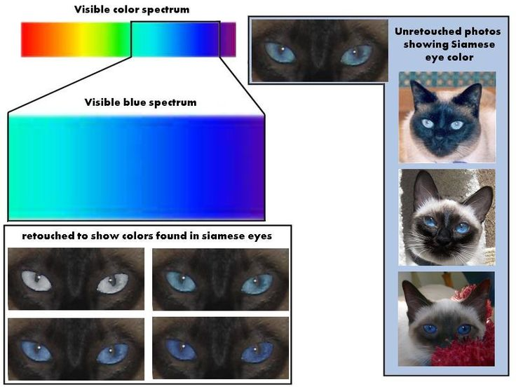 cat eye discharge black