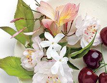 Kirsikkapuun kukka Kukkia Romanttiseen kirsikankukkien tuoksuun sekoittuuhienostunutta jasmiinia, freesiaa ja aavistus hedelmiä.