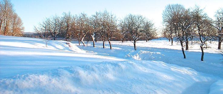 Kostenloser Phantasiereisen-Text mit Einleitungstext und Rücknahme. Spaziergang im Winterwunderland durch einen Park, See, spielende Kinder, Friede, Freude