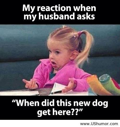 "My reaction when my husband asked ""when did this new dog get here?"""