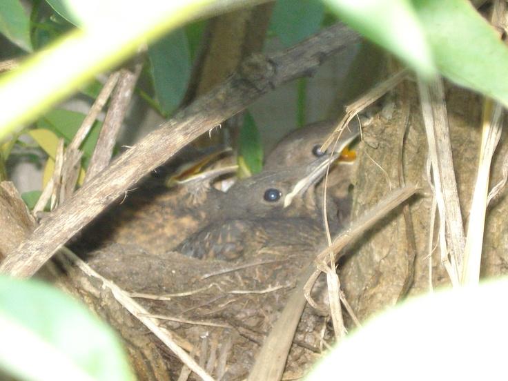 Baby birds outside the bedroom window in 2010.