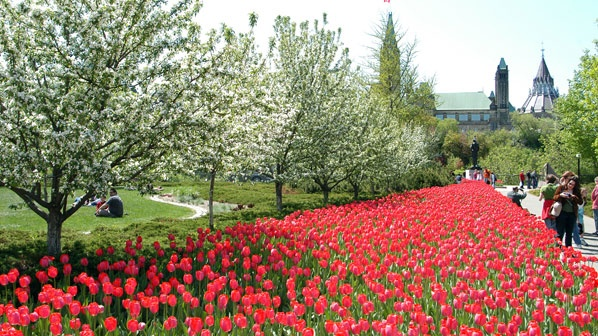 3rd - 20th May 2013: The Canadian Tulip Festival, Ottawa, #Canada: This #Festival was first held in 1953 & has now become the largest Tulip Festival in the world. Over 1 million tulips attract more than 500,000 visitors each year. There are also a number of special events taking place throughout the Festival period.