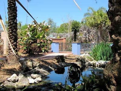 59 Best Florida Native Plants Images On Pinterest Florida Gardening Landscaping Ideas And
