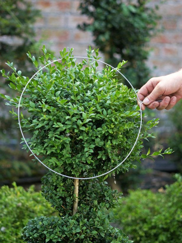 Use Wire Template to Get Correct Shape for Topiary