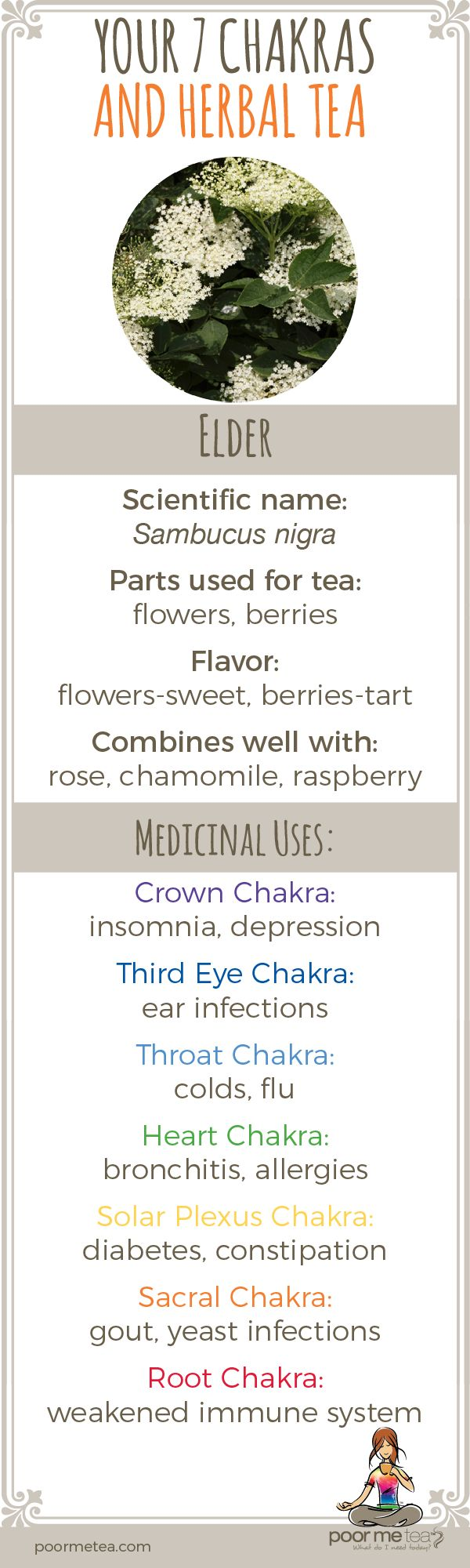 Elder Flower, elder berry health benefits and medicinal uses. Parts used for herbal tea and flavor.  Learn to create your own chakra teas.