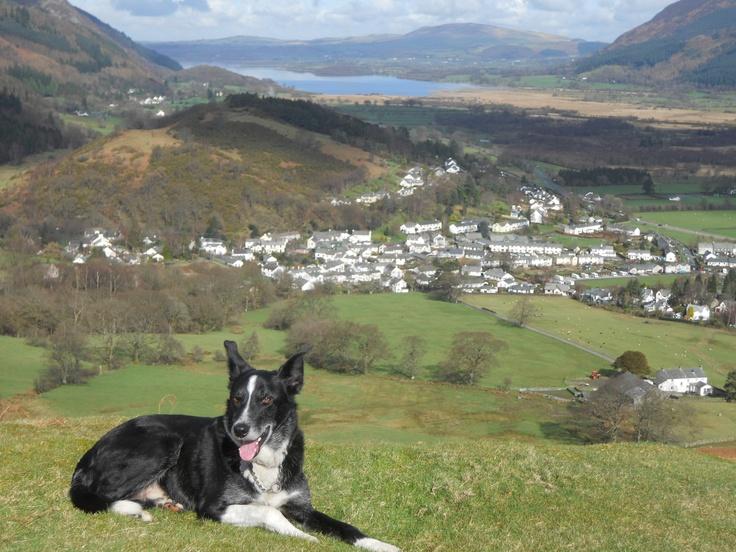 Jack - resting before heading for Barrow Fell, above Basenthwaite.