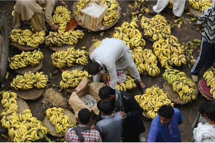 Panama Disease could wipe out most bananas