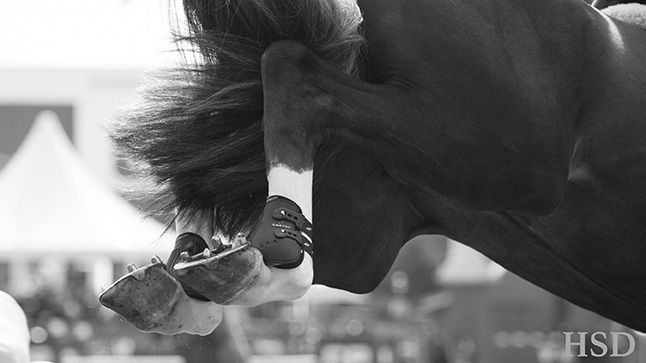 Spruce Meadows - Horse Sport Destinations