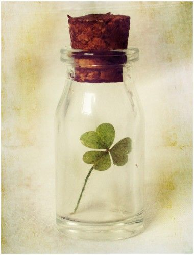 lucky four leaves clover