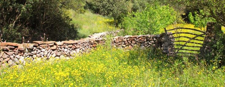 Minorcan spring