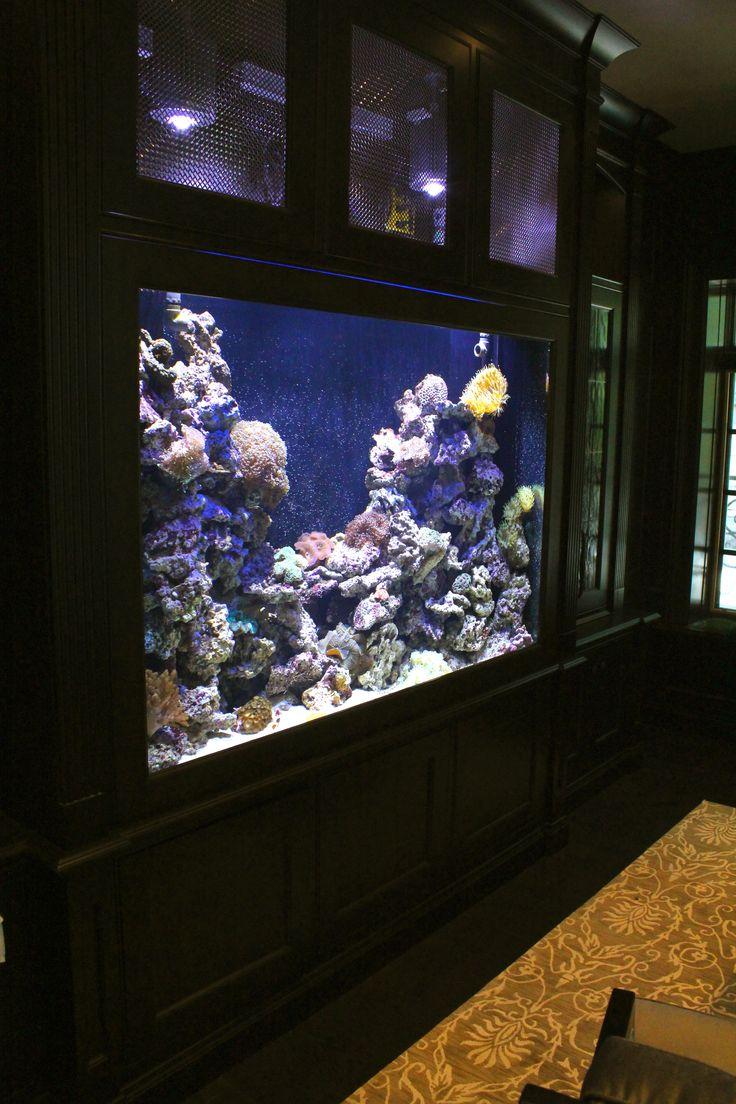 Fish aquarium in bedroom - Home Aquarium Ideas The Aquarium Buyers Guide 350 Gallon Saltwater Reef Built In To The