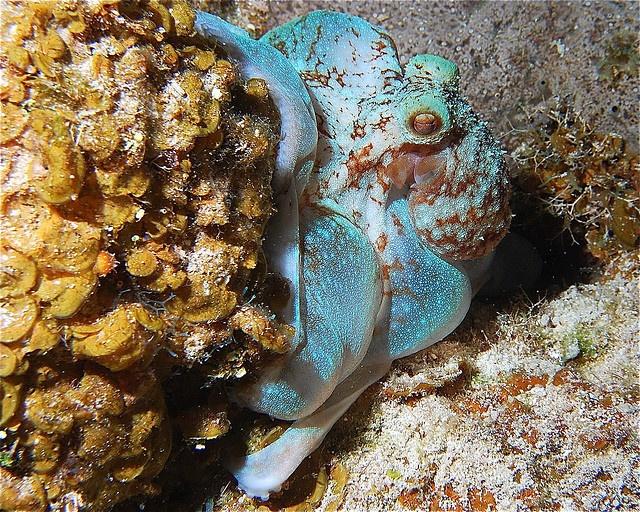 44 best deep blue cayman images on pinterest deep blue for Deep sea fishing grand cayman