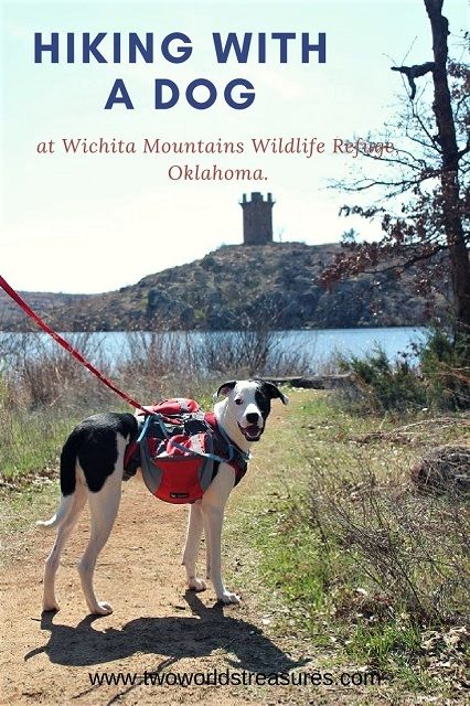 Our first intense #hiking with our dog #Snoopy to #WichitaMountainsWildlifeRefuge in #Oklahoma. We went during Easter weekend and apparently almost every campers came with their 4 legs friend. It's a fun place to be outdoor with your active dogs, even for the first timer like our dog.