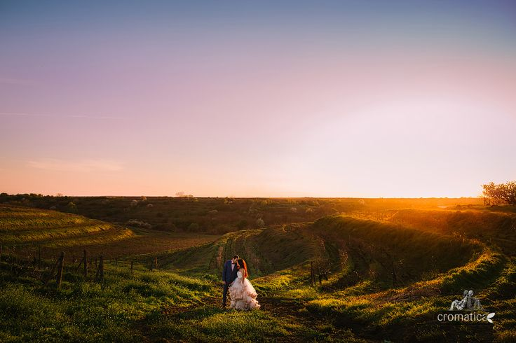 after wedding photo session in a vineyard at sunset