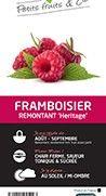 FRAMBOISIER 'Heritage' - Pépinière Cerdys
