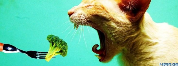cat brocolli facebook cover