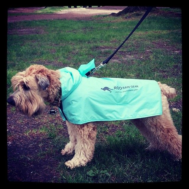 Dogs love our waterproof dog ponchos made from 100% recycled plastic bottles