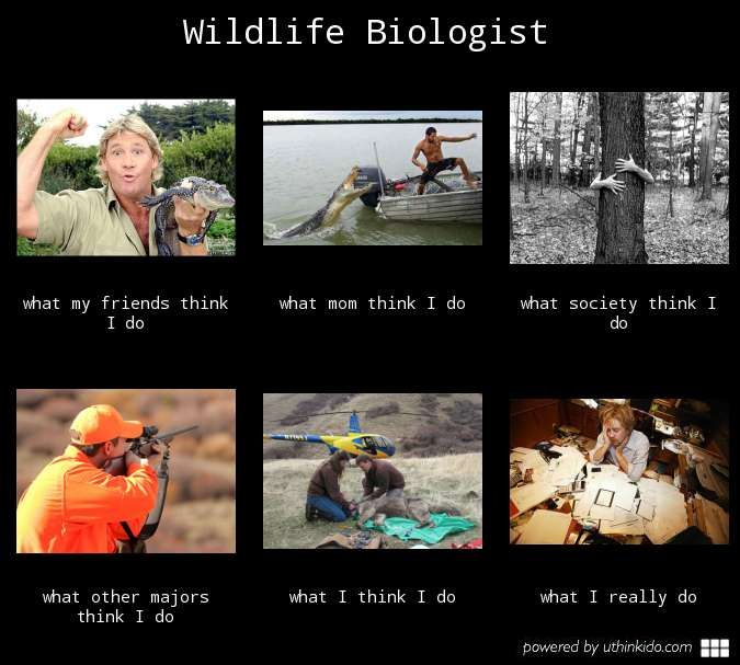wildlife biologist what i think i do