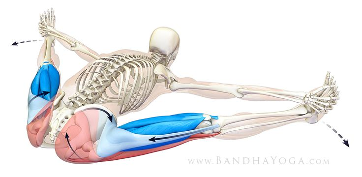 The Daily Bandha: Refining Your Forward Bends With The TFL
