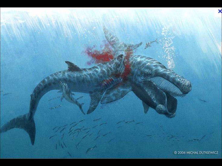 46 best images about Mosasaurus (Cretaceous) on Pinterest ...