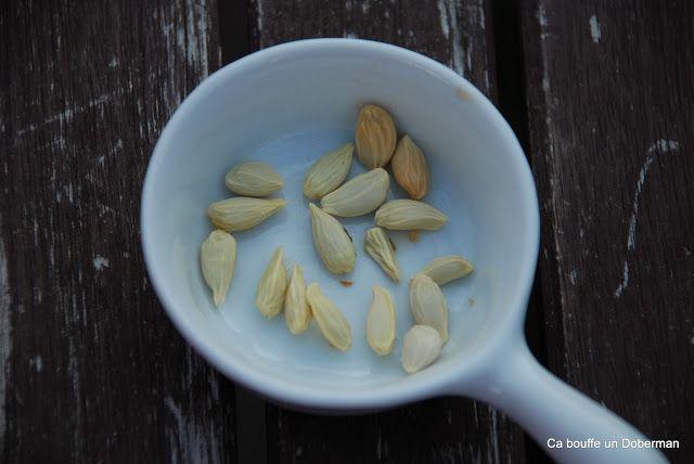 Comment obtenir de beaux Citronniers en gardant les pépins de Citrons